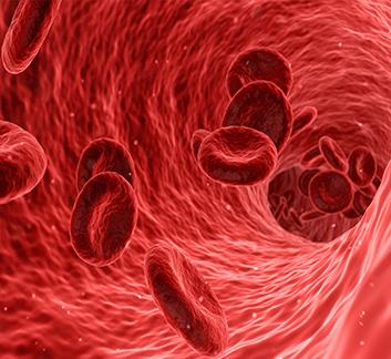 Photo du flux sanguin
